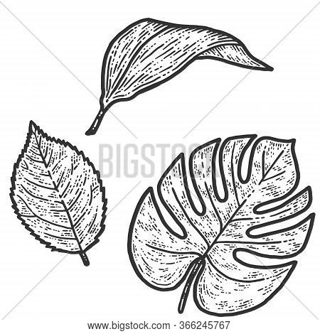 Set Rose, Lily And Monstera Leaf, Isolated Plant. Sketch Scratch Board Imitation.