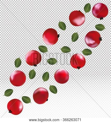 Set Of Red Currant. Freshly Picked Red Currant With Green Leaf. Useful Ripe Fresh Red Currant Berry