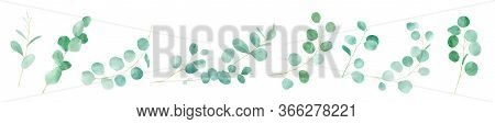 Watercolor Green Floral With Eucalyptus. Hand Painted Pattern With Branches Eucalyptus. Perfect For