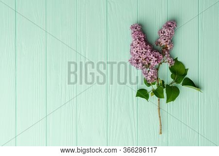Light Lilac Flowers Isolated On Turqoise Wooden Background