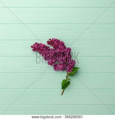 Spring Lilac Violet Flowers, Soft Focus, Turquoise Background