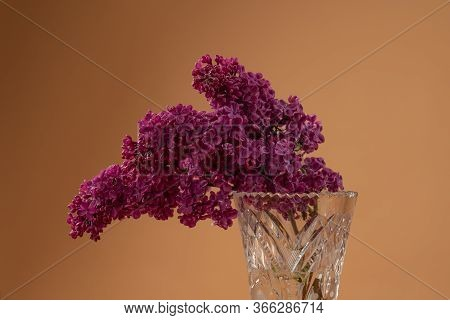 Still Life With Blooming Branches Of Purple Lilac In Vase