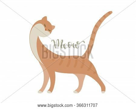 Standing Graceful Red Cat With Meow Lettering. Vector Flat Illustration. Rgb. Global Colors