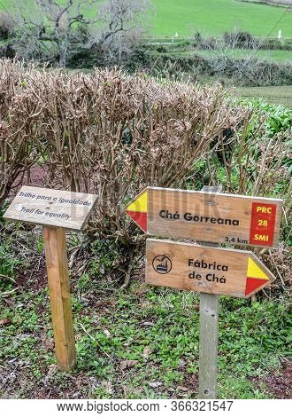Maia, Azores, Portugal - Jan 14, 2020: Tourists Signs On The Trail In Gorreana Tea Plantations In Sa