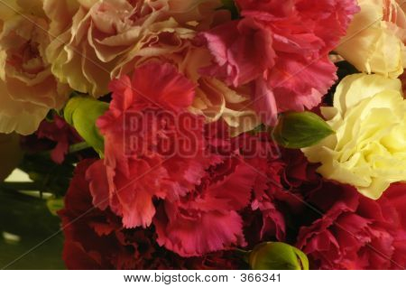 Carnations 2
