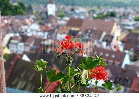 flower on the windowsill