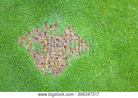 The Porous And Rough Suface Of Brown Laterite Steping Stone, Square Form On A Fresh Green Zoysia Gra