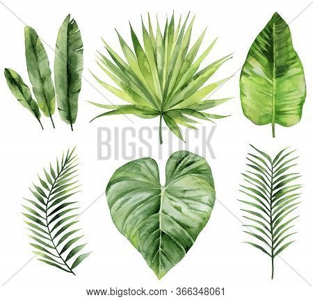 Exotic Leaves Set. Palm Fronds Collection. Watercolour Illustration Isolated On White Background.