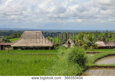 Jatiluwih Rice Terraces. The Beautiful Rice Fields In Bali Have