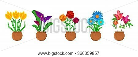 Set Flower In Pot Isolated On White Background. Indoor And Outdoor Landscape Garden Potted Plants. P