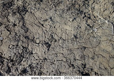 Cracked Wet Mud Clay Earth Background. Texture Of Wet Soil, Top View.