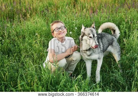 Children's Day. Happy Little Child Boy Having Fun With Dog Pet Husky On Field. Summer Walk. Childhoo