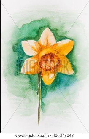 Watercolor Drawing Of The Jonquil Isolated On The White Background. Illustration Of Yellow Narcissus
