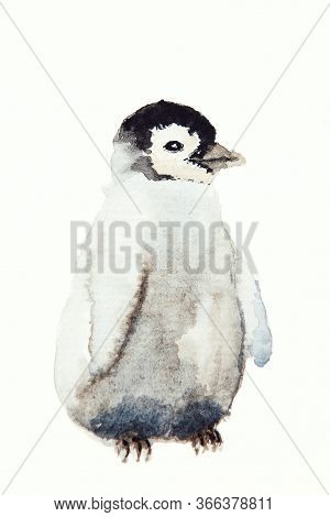 Watercolor Drawing Of Penguin The Isolated On The White Background. Illustration Of The Penguin