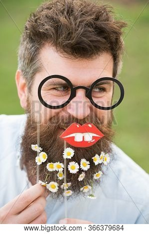 Man With Long Beard And Mustache, Defocused Green Background. Guy Looks Nicely With Daisy Or Chamomi