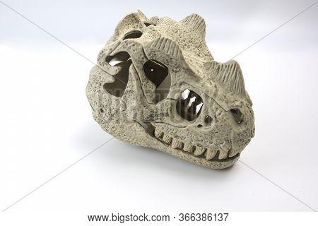 The Dinosaur Head Is Gray Plastic. Fossil Jurassic