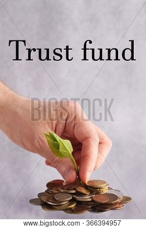 Green Sprout Sprouts From A Stack Of Coins On A White Background. Hand Picks A Seedling. Isolated. T