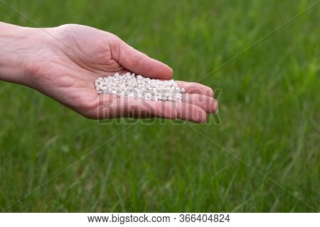 Granular Fertilizer In Hand On A Background Of Young Green Grass