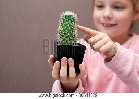 Child Touches The Needles Of A Cactus