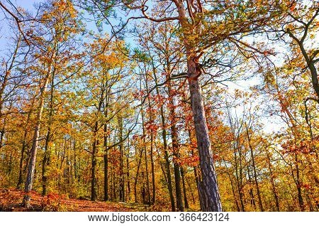 Horizontal Photography Of The Autumn Trees With Colorful Fall Leaves. Autumn Forest, Fall Foliage. B