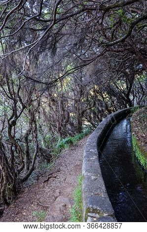 Hiking Path In Dark Laurel Forest, Part Of Levada 25 Fontes In Madeira Island, Portugal. Irrigation