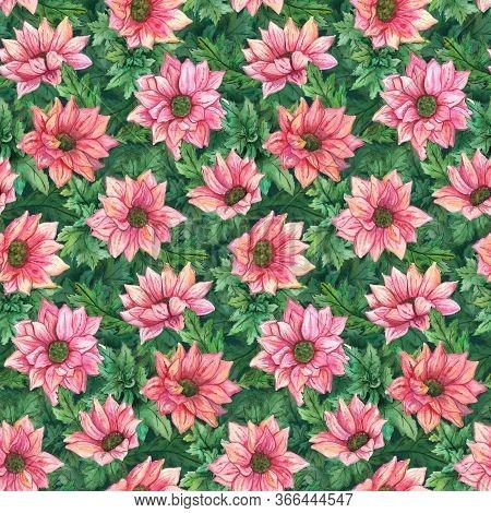 Watercolor Pink Chrysanthemum Flowers Green Leaves Seamless Pattern Texture Background