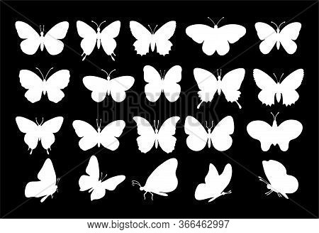 Butterflies Silhouettes. Spring Butterfly Silhouette Collection White On A Black Background. Vector
