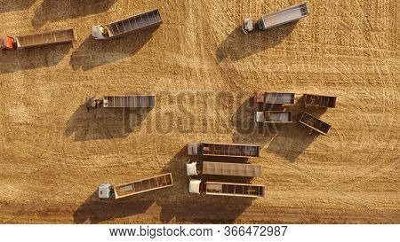 Grain Trucks On A Wheat Field During Harvest. Transportation Of Grain From The Field. Agriculture In