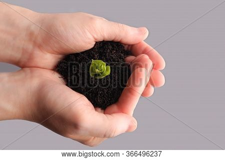 Human Hands Hold A Handful Of Earth With A Young Sprout. Pile Of Land With A Plant In Human Palms. E