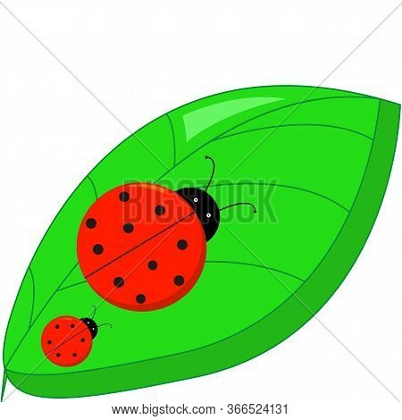 Ladybugs Crawling On A Green Leaf On A White Background Top View. Vector Illustration
