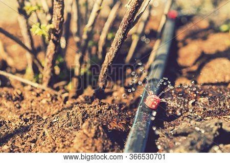 Sprinkler Systems, Drip Irrigation, Watering Lawns. Drip Irrigation System Close Up. Water Saving Dr