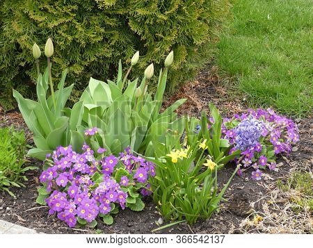 Colorful Different Flowers On The Flower Bed