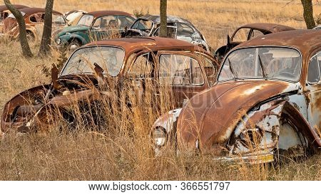 Okemah, Ok - 2 Mar 2020: Wrecked Volkswagon Beetle Cars In Rusty And Deteriorating Condition, With M