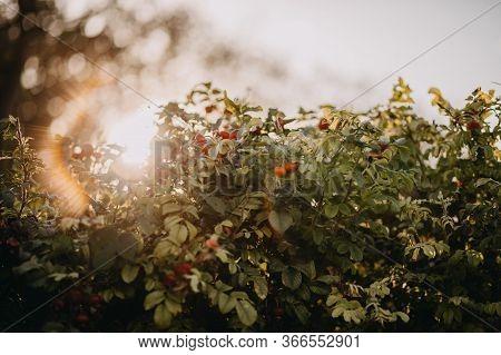 Photo Of Flower Pistils Bush In The Wild