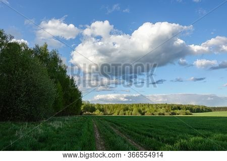 Forest In A Sunny Day With Sky And White Clouds