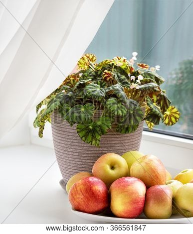 Still Life With Apples And Flower On The Window Board. Still Life On Windowsill.