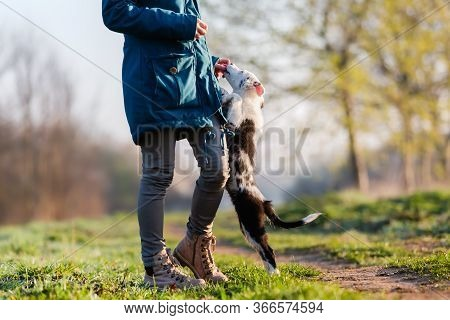 Woman Walks With Cute Small Dogs Outdoors