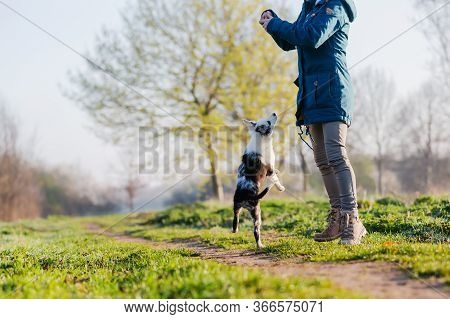 Woman Playing With A Cute Puppy Outdoors