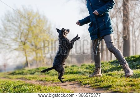 Woman Playing With A Cute Small Dog Outdoors