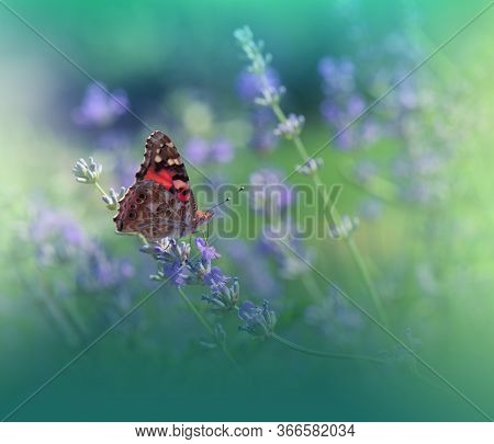 Beautiful Green Nature Background.Floral Art Design.Macro Photography.Floral abstract pastel background with copy space.Butterfly and Lavender Field.Butterfly in Summer Floral Background.Beautiful Butterfly on a Flower.Creative Artistic Wallpaper.