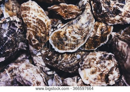 Closed Oysters, Fresh Oyster Shell, Mollusks In Seafood Market, Aphrodisiac Sea Restaurant, Expensiv