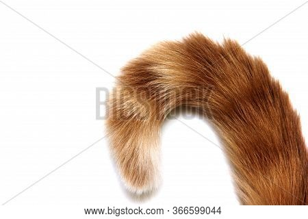 The Tip Of A Red Cat's Tail Is Isolated In Close-up On A White Background.