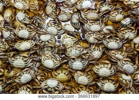 The Group Of Salted Crab Or Pickled Crab. Many Fresh Black Raw Small Freshwater Crabs In The Market.