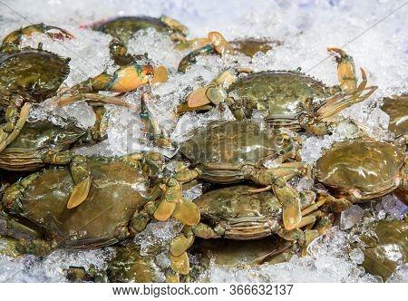 Flower Crab, Blue Swimmer Crab, Blue Manna Crab, Sand Crab, Portunus Pelagicus . Stack Of Fresh Blue