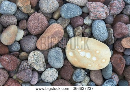 Light Pebble On A Background Of Dark Pebble