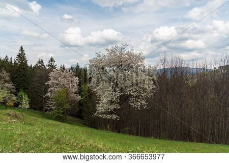Springtime Mountain Scenery With Meadow, Trees And Hills On The Background Bellow Travny Hill In Mor