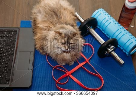 Fat Gray Cat With A Dumbbell In The Sports Mat. Sports Concept. Home Training