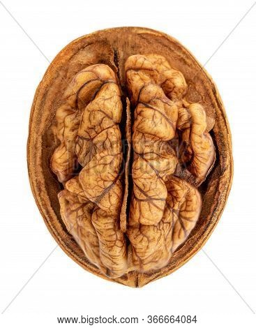Walnut Isolated. Walnut Kernel Nut On White Background. Close Up. Top View