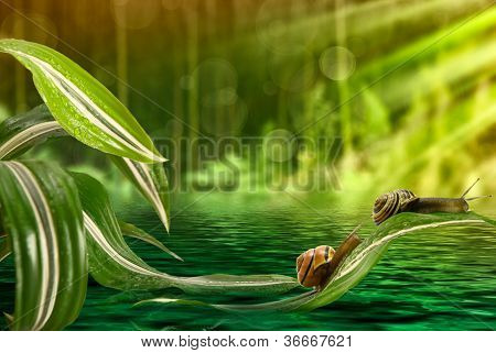 Snail On Leaves Above The Water
