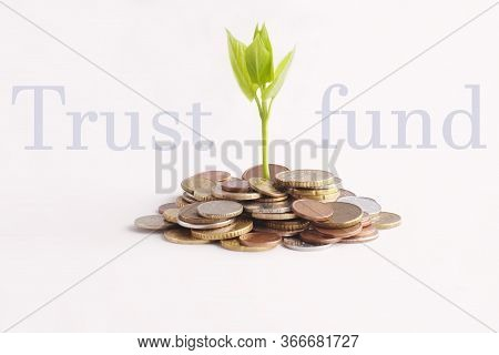 Green Sprout Sprouts From A Stack Of Coins On A White Background. Isolated. Trust Fund, Contribution